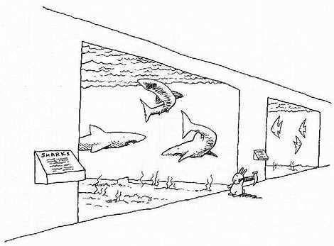 bunny-requin