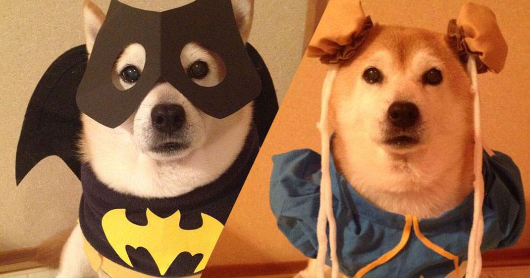 chien-cosplayeur-une
