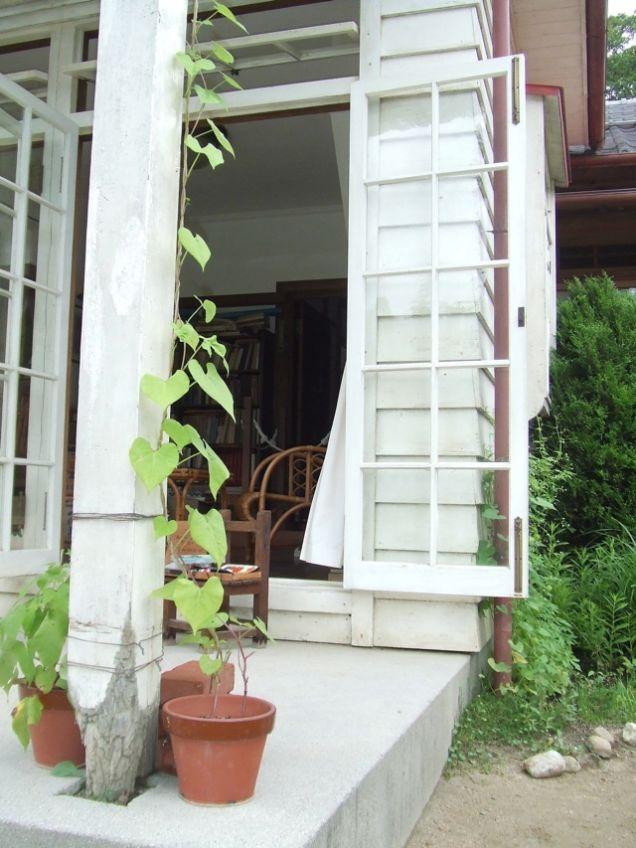 maison-totoro-plante